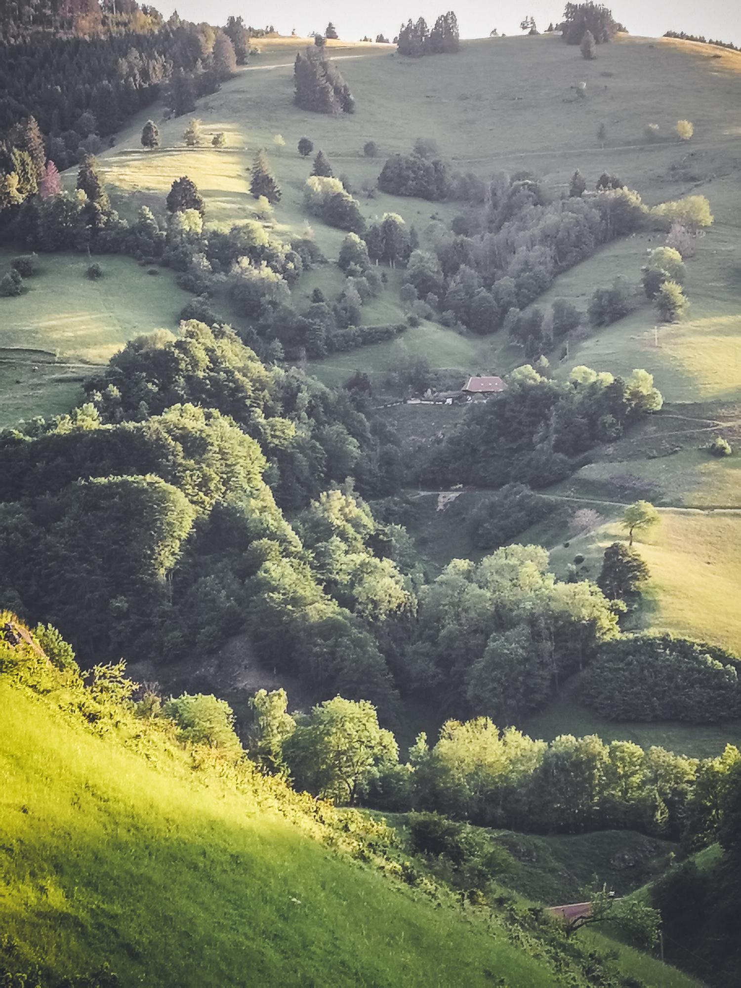 Blick auf einen Berghang im Hochschwarzwald mit Wiesen, Bäumen und Häusern