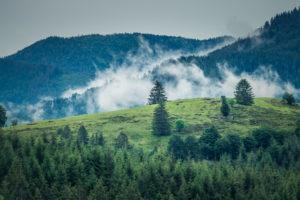 Aufnahme vom Schwarzwald mit Wolken die aus den Wäldern aufsteigen