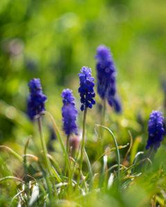 Nahaunahme von Blüten im Frühjahr