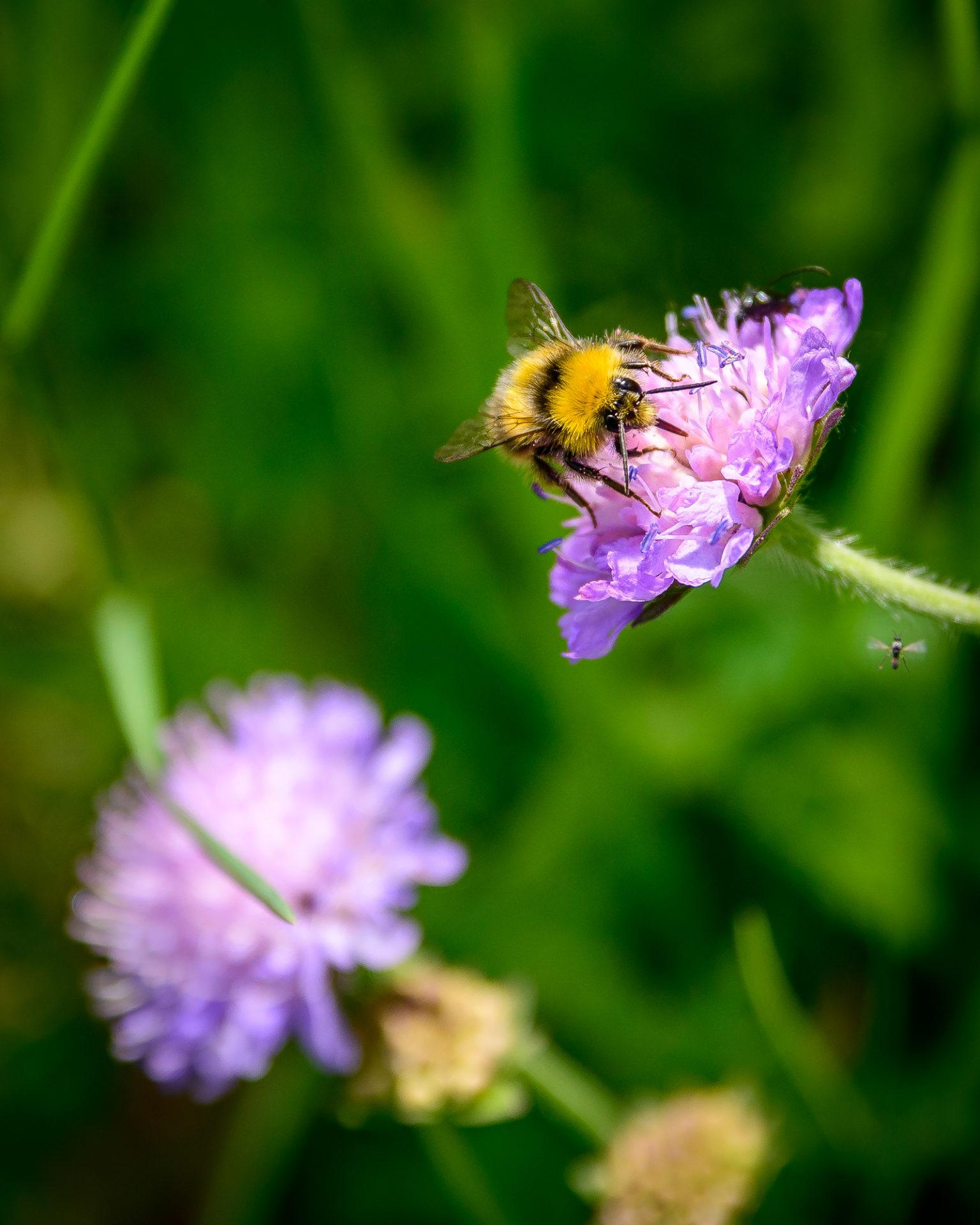 Nahaufnahme eines Insekts auf einer Blüte