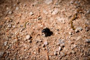 Nahaufnahme eine Käfers auf einen Waldweg