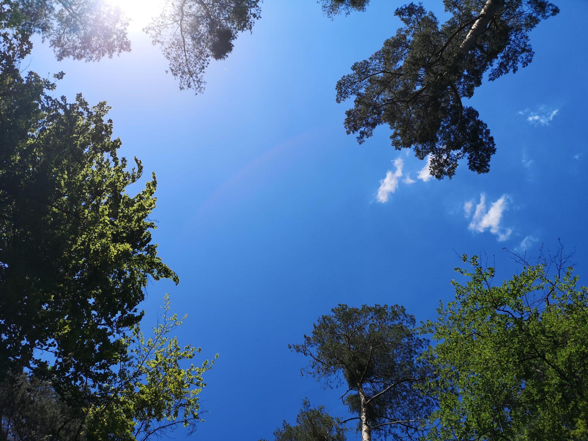 Blick in den Himmel im Hardtwald