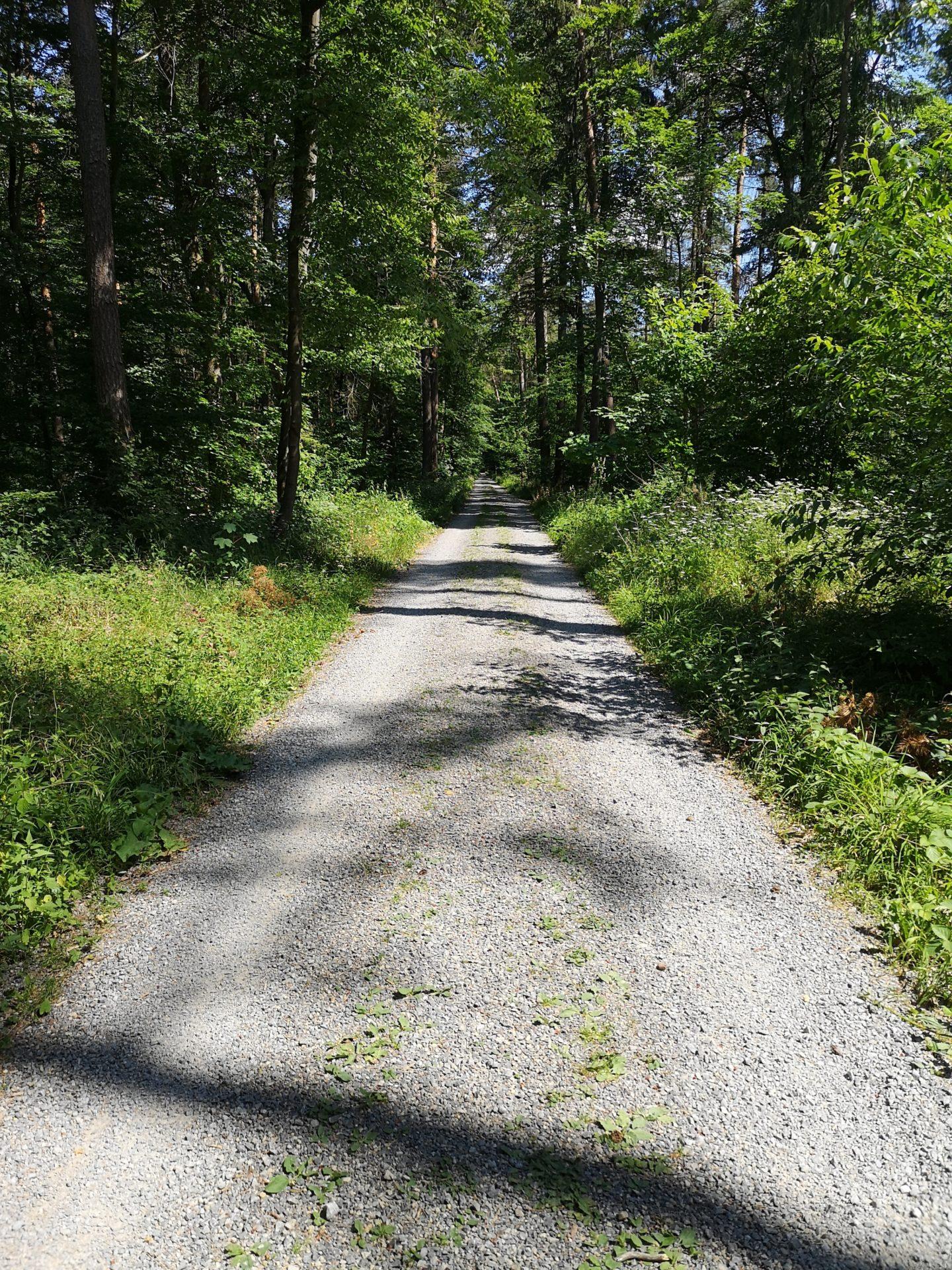 Wanderweg mit Bäumen im Hardtwald