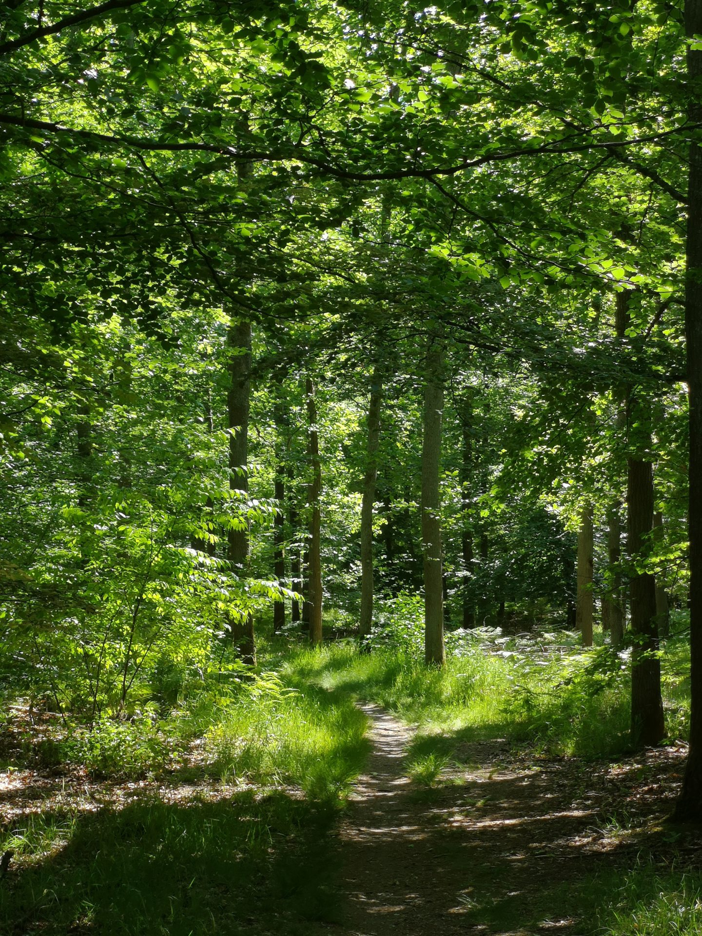 Ein grüner Weg durch den Hardtwald