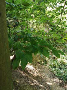 Baumstamm und Blätter in Nahaufnahme