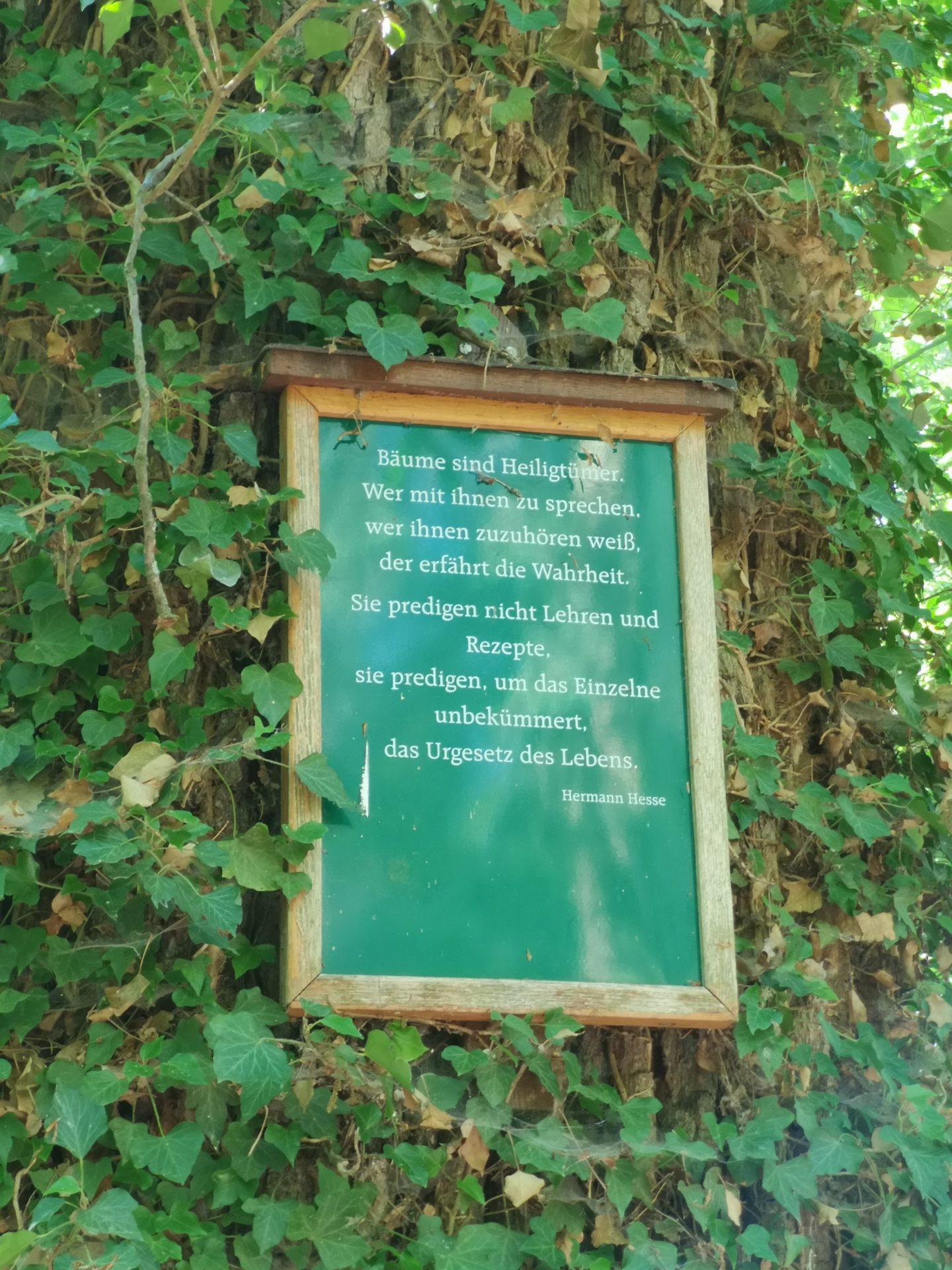 Tafel mit einem Gedicht von Hermann Hesse an einem Efeu bewachsenen Baumstamm