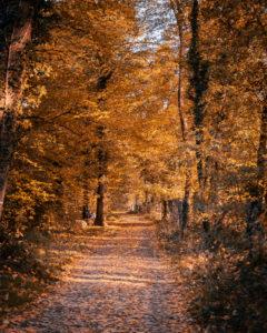 Herbstlicher Wanderweg im Oberwald von Karlsruhe