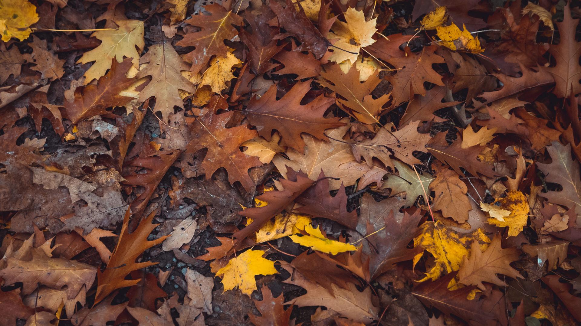 Buntes Herbstlaub das auf dem Waldboden liegt