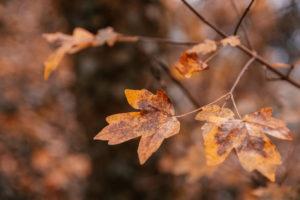 Zweig mit Herbstlaub