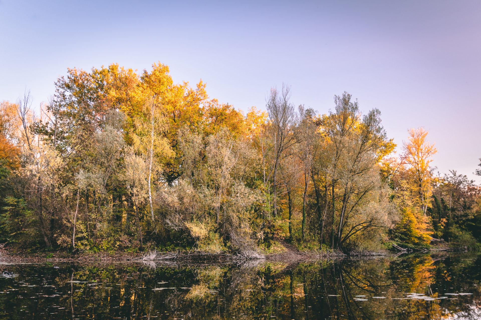 Blick auf den Oberwaldsee mit Spiegelung auf dem Wasser