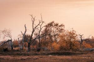 Herbstliche Bäume am späten Nachmittag