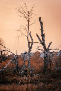 Herbstliche Bäume im Gegenlicht