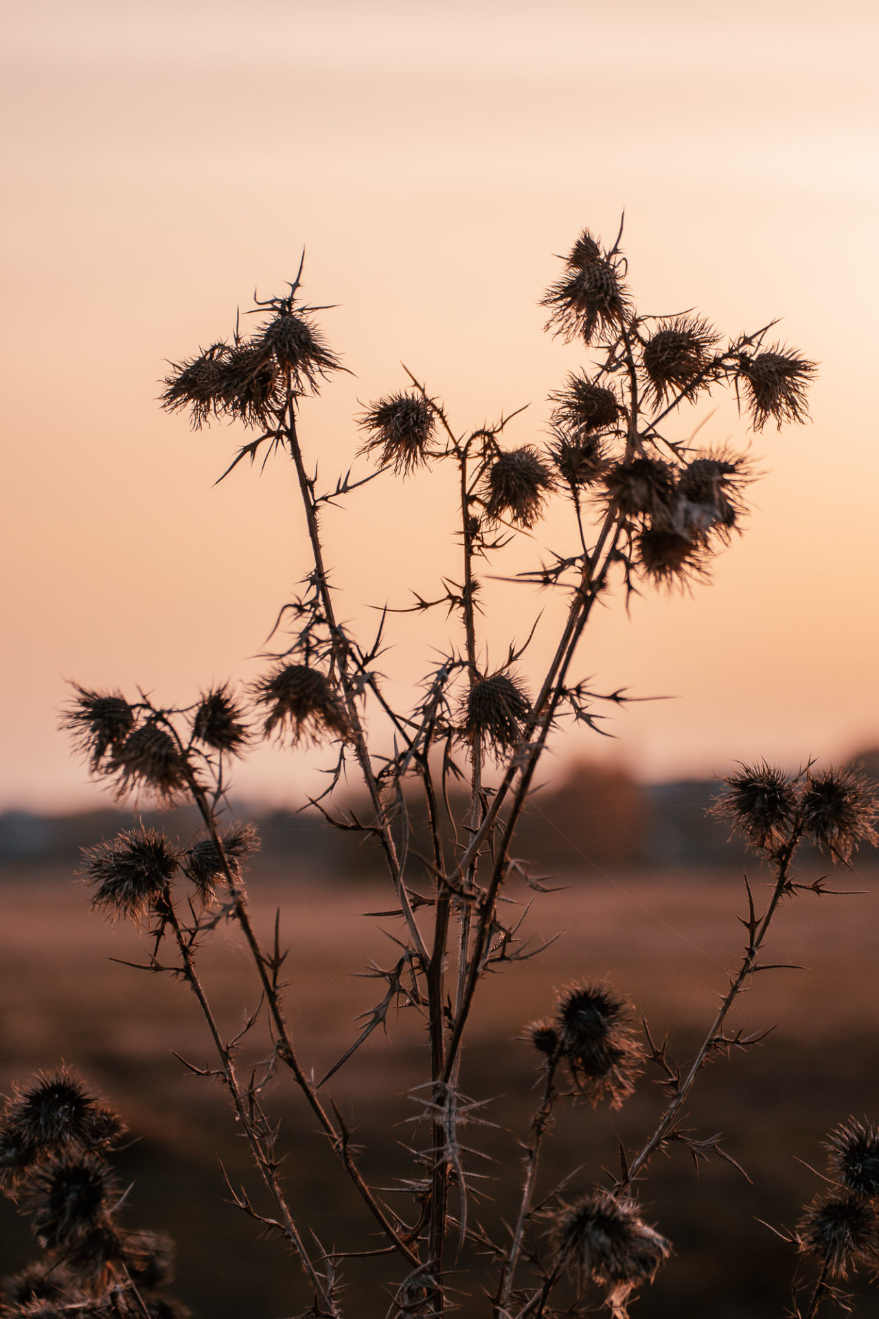 Herbstliche Pflanzen im Gegenlicht am Abend